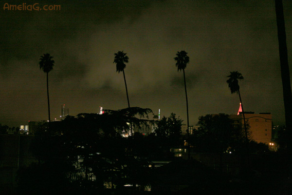 los angeles noir rain soaked streets and palm trees